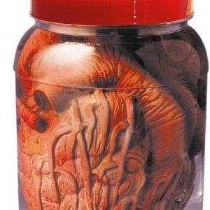 Organ i Burk Osorterade